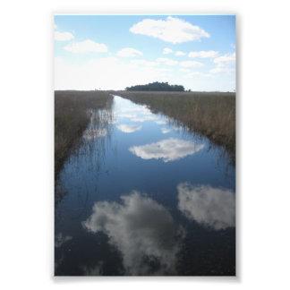 Pristine Swamp Art Photo
