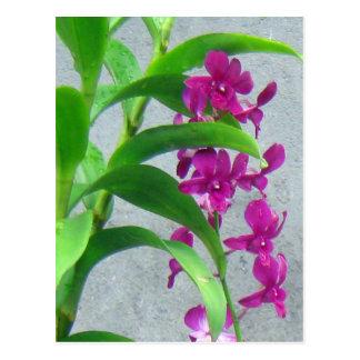 Private Orchid Garden Postcard