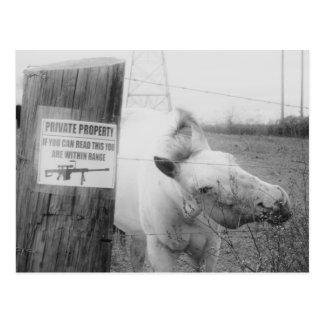 Private Property horse black & white Postcard
