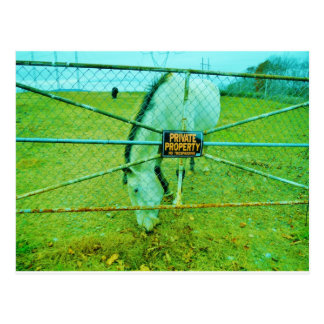 Private Property, Horse Postcard