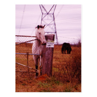 Private Property lavender Horse Postcard