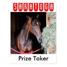 Prize Taker Postcard