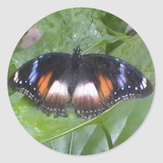 Prized Butterfly Classic Round Sticker