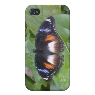Prized Butterfly Cover For iPhone 4