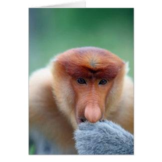 Proboscis Monkey in Borneo. Card