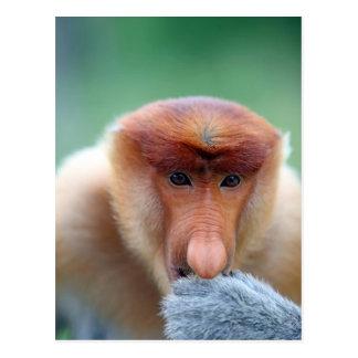 Proboscis Monkey in Borneo. Postcard