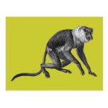 Proboscis Monkey Postcards