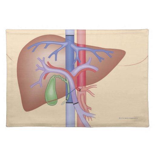Procedimiento del trasplante del hígado manteles