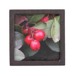 Procumbens del Gaultheria del Teaberry Cajas De Regalo De Calidad