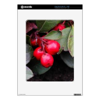 Procumbens del Gaultheria del Teaberry Calcomanía Para El iPad