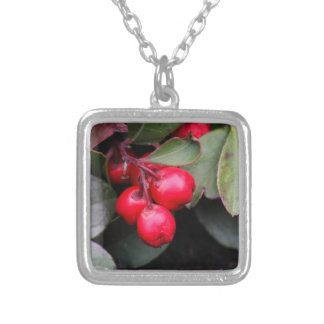Procumbens del Gaultheria del Teaberry Colgante Cuadrado