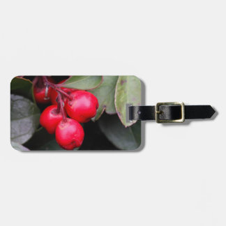 Procumbens del Gaultheria del Teaberry Etiquetas Para Equipaje