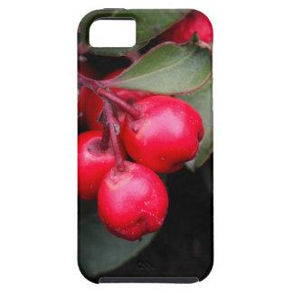 Procumbens del Gaultheria del Teaberry iPhone 5 Fundas