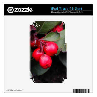Procumbens del Gaultheria del Teaberry iPod Touch 4G Skins