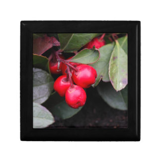 Procumbens del Gaultheria del Teaberry Joyero Cuadrado Pequeño