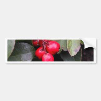 Procumbens del Gaultheria del Teaberry Pegatina Para Auto