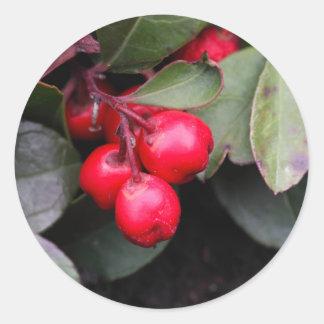 Procumbens del Gaultheria del Teaberry Pegatina Redonda