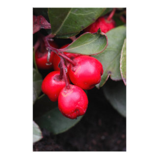 Procumbens del Gaultheria del Teaberry Personalized Stationery