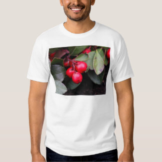 Procumbens del Gaultheria del Teaberry Poleras
