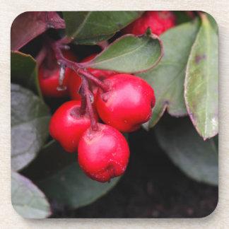 Procumbens del Gaultheria del Teaberry Posavaso