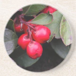 Procumbens del Gaultheria del Teaberry Posavaso Para Bebida