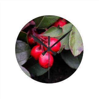 Procumbens del Gaultheria del Teaberry Reloj Redondo Mediano