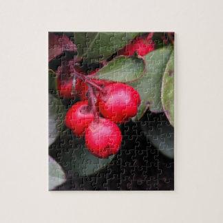Procumbens del Gaultheria del Teaberry Rompecabezas Con Fotos