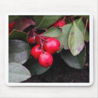 Procumbens del Gaultheria del Teaberry Tapete De Ratón