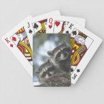 Procyon Lotor de los mapaches) del lago fish, Cartas De Póquer
