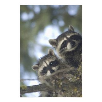 Procyon Lotor de los mapaches) del lago fish, cent Arte Con Fotos