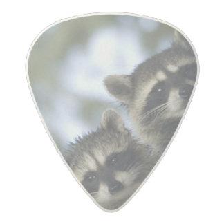 Procyon Lotor de los mapaches) del lago fish, Púa De Guitarra Acetal