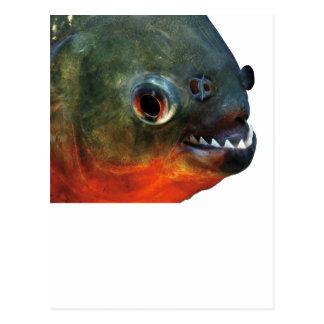 Product of piranha postcard