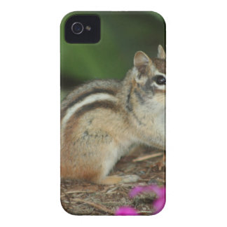 product with photo of cute chipmunk Case-Mate iPhone 4 cases
