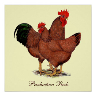 Production Red Chickens Poster