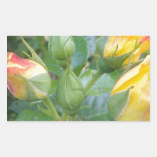Producto de la flor pegatina rectangular