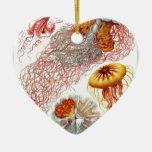 Producto de la naturaleza del der de Ernst Haeckel Ornatos