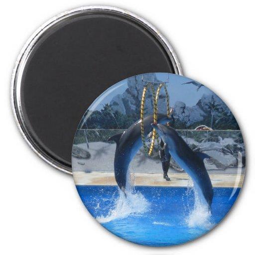 Producto del delfín imanes
