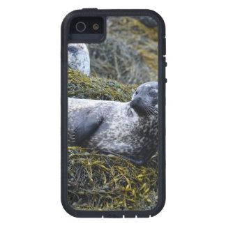 Producto del personalizar iPhone 5 carcasa