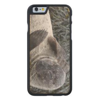 Producto del personalizar funda de iPhone 6 carved® slim de arce