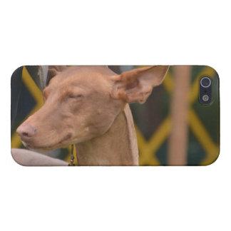 Producto del personalizar iPhone 5 fundas