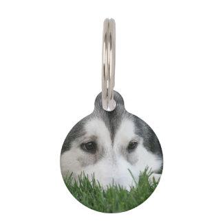 Producto del personalizar placas de mascota