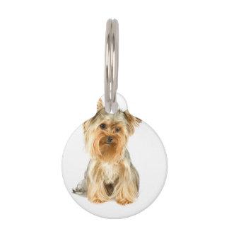 Producto del personalizar placa de mascota