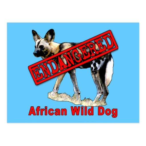 Productos animales en peligro africanos del perro tarjetas postales