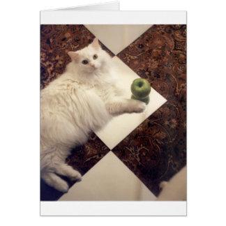 Productos atractivos del gato tarjeta de felicitación