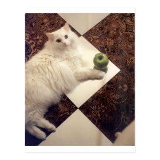 Productos atractivos del gato tarjetas postales