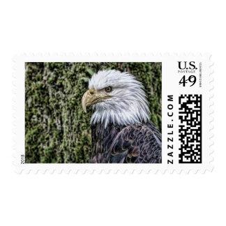 Productos de American Eagle