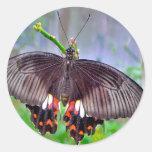 Productos de la mariposa a deslumbrar pegatinas