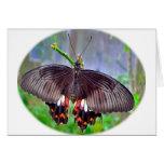 Productos de la mariposa a deslumbrar tarjetas