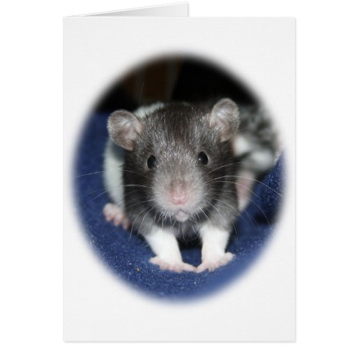 Productos de la rata del bebé el mirar fijamente felicitación