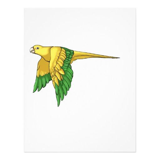 Productos de oro de Conure Flyer A Todo Color
